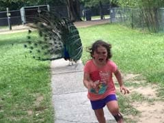 Pic of Little Girl Being Chased by Peacock Starts Epic Photoshop Battle