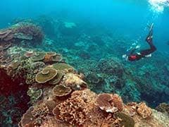 Great Barrier Reef Named Best Place To Visit Worldwide