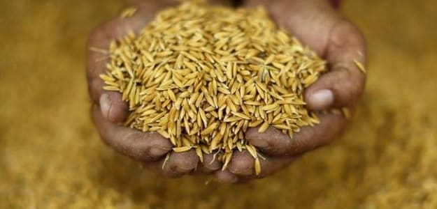 Government Raises Rice Purchase Price For 2016-17