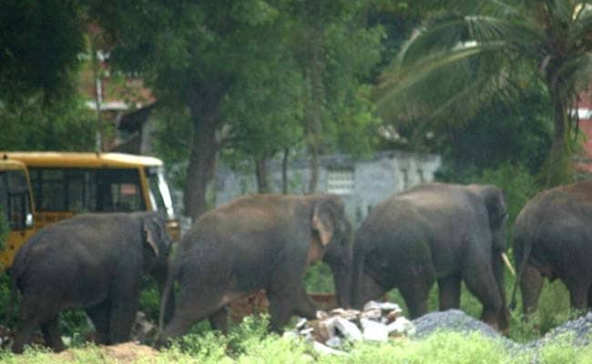 हाथियों के कॉरिडार का मामला : नीलगिरी में दो दिन में 27 होटलों को सील करने का आदेश