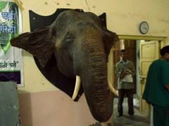 Frozen in Time: India's Last Taxidermist Keeps on Stuffing