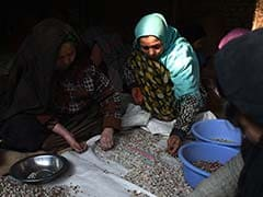 Pistachios, Afghans' Green Gold, Coveted By Taliban