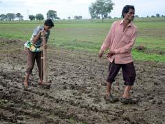 अकोला : किराये पर बैल लेने के लिए नहीं हैं पैसे, किसान ने बेटे को खेत में जोता