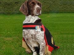 Heroic Royal Army Force Sniffer Dog Honoured For Saving Thousands Of Lives