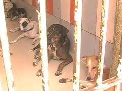 Activists Allege Horrifying Dog Abuse Under Chennai Body's Watch
