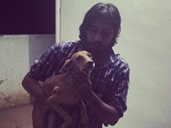 After Horror Video, Chennai Dog, Thrown From Roof, Found Alive