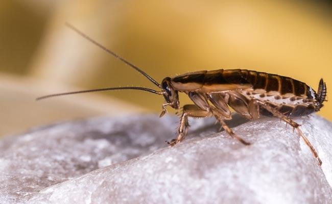 Hyderabad Eatery Faces Flak Over Cockroaches Found Floating In Soft Drink