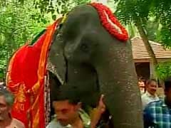 Asia's 'Granny' Jumbo Felicitated: Eyeing Guinness Entry