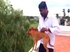 Two Medical Students Who Threw Dog Off Roof Fined Rs 2 Lakh Each