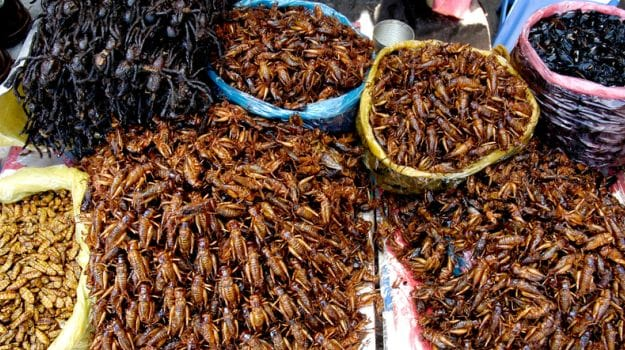 A Mouth Full of Crickets? Lobbyists Speak Up for Edible Insects