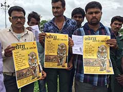 Over 150 People Looking, Rs 50,000 Reward For Jai The Missing Tiger