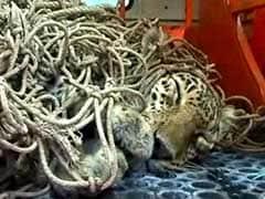 महाराष्ट्र : वाशिम जिले में भूख से बेहाल तेंदुए ने दम तोड़ा