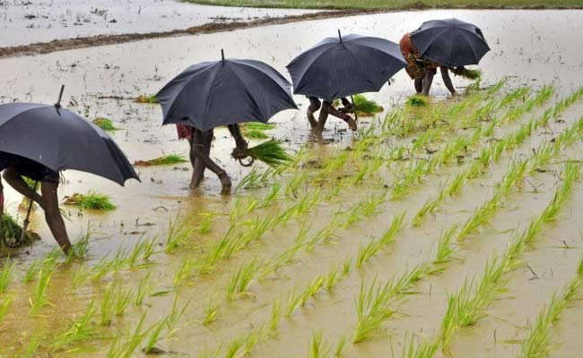 India To Receive Below-Average Monsoon Rains In Next Two Weeks