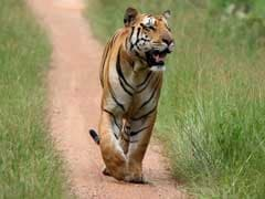 India's Tiger Population To Double By 2022: Environment Minister Anil Madhav Dave