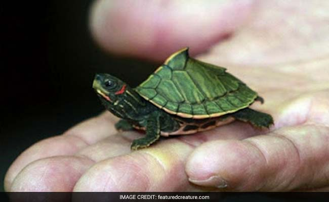 4 Indians Held In Malaysia For Possessing Exotic Turtles