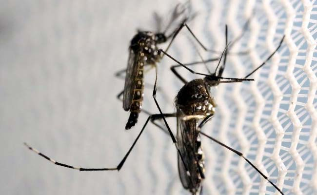 'Mosquitoes Don't Wait For Meetings': Court To Delhi Government On Dengue