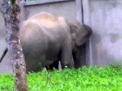 Green Court Clears Path For Assam Elephants, Orders Wall To Be Torn Down
