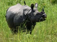 Another Rhino Killed By Poachers In Assam's Kaziranga Park, 18th This Year