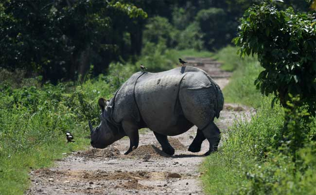 Poachers Killed 74 Rhinos In Assam In 3 Years: Forest Minister