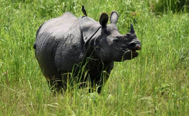 Green Court Asks Assam Government To Ensure Animal Safety in Kaziranga