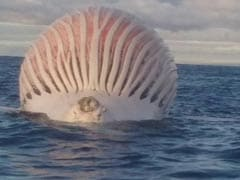 This Weird Sea Creature Stumped Fishermen. Can You Identify It?