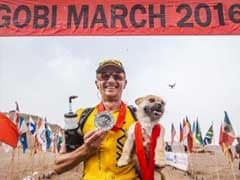 Stray Dog Wins Hearts - And New Home - After Following Man Through 155-Mile Ultramarathon