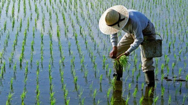 Flooding Puts A Damper On US Rice Harvest