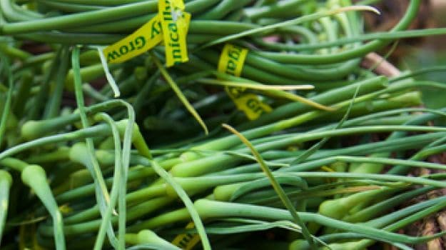What's the Difference Between Green Garlic and Garlic Scapes?