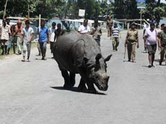 Over 300 Animals Killed In Assam Floods In Kaziranga