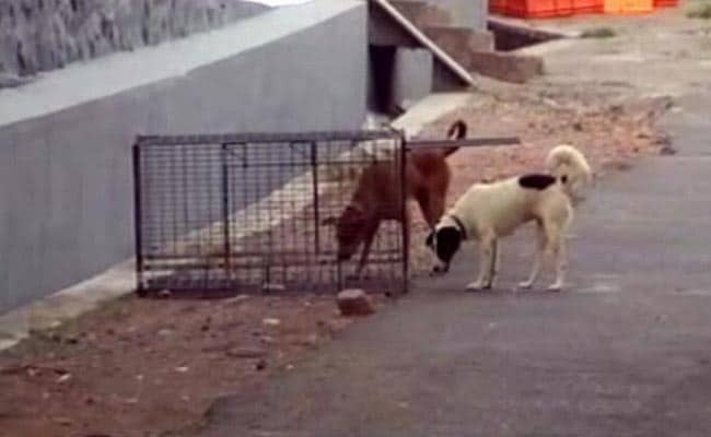 85-Year-Old Mauled To Death By Stray Dogs In Kerala