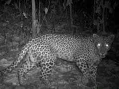 महाराष्ट्र : कल्याण के मुरबाड़ में आदमखोर तेंदुए का आतंक, गोली मारने का आदेश