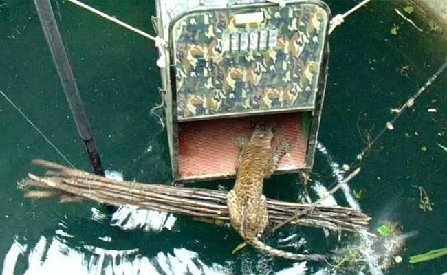 How A Drowning Leopard Was Rescued From A 60-Feet-Deep Well In Maharashtra