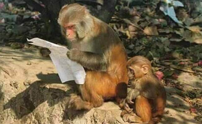This Pic of a Monkey Reading Begs to be a Meme. Send Us Your Versions