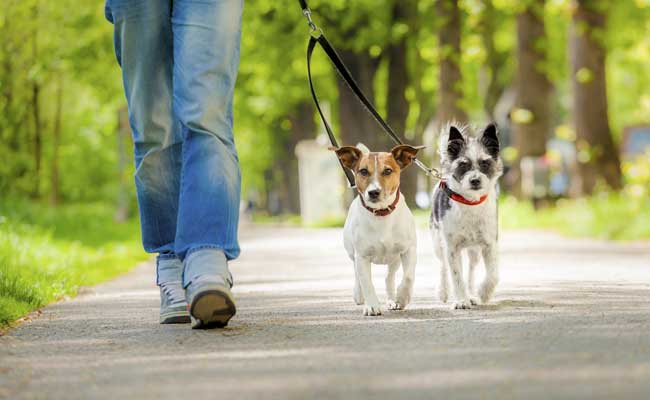 pet dogs generic