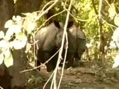 8 Rhino Calves Among 107 Animals Rescued From Kaziranga Park