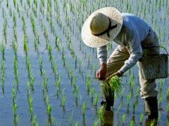 14 फसलों का न्यूनतम समर्थन मूल्य बढ़ा, कांग्रेस ने उठाया सवाल