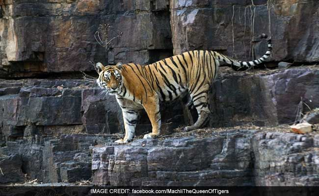 CBI Registers Initial Probe Into Tiger Poaching Incidents In Uttarakhand
