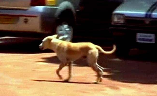 केरल के पुलुविला में कुत्तों के हमले मेंएक की मौत