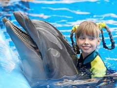 US Government Seeks Ban On Swimming With Hawaii Dolphins