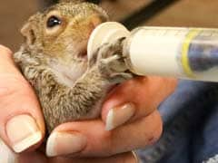 Hundreds Of Baby Squirrels That Fell From Trees During Virginia Storm Are Rescued