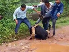 छत्तीसगढ़ : रोडरेज के मामले में बीजेपी नेता का बेटा युवक की पिटाई करते कैमरे में कैद