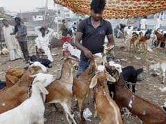 Uttarakhand High Court Bans Goat Slaughter In The Open On Bakr-Eid
