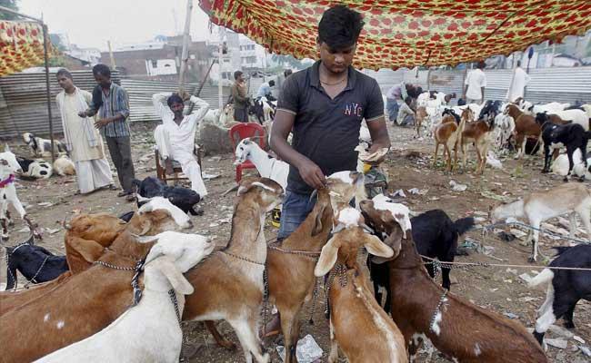 Uttarakhand High Court Bans Goat Slaughter In The Open On Bakr-Eid