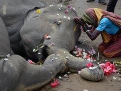 Two Elephants Electrocuted In Darjeeling