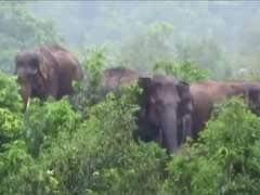 2 Children Killed In Jharkhand As Elephants Destroy Mud House