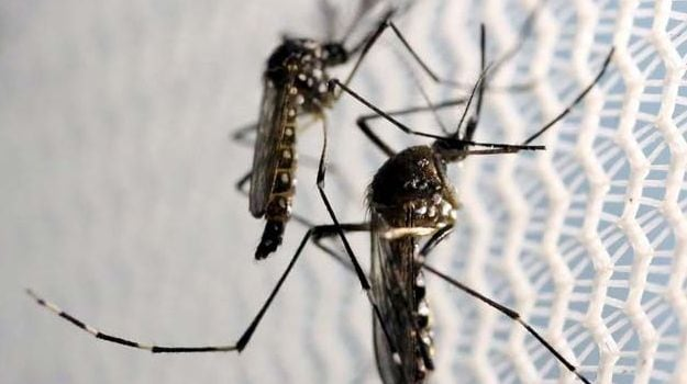 Andhra Pradesh Government Aims to Make State Mosquito-Free in 2 years