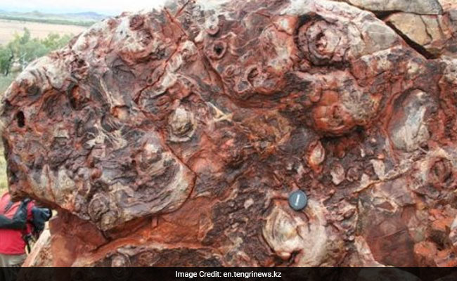 New Fossils Show Life On Earth At Least 3.7 Billion Years Old