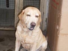 Caesar, Hero Dog Who Saved Lives During 26/11 Mumbai Attacks, Dies