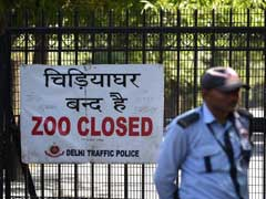 Four Serological Samples From Delhi Zoo Test Positive For Bird Flu