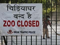 Delhi's Bird Flu Outbreak From A Weaker Strain This Time, Say Experts